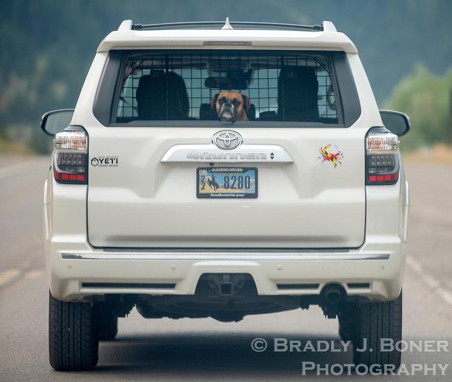 Dog in a car, Hoback, Wyo.