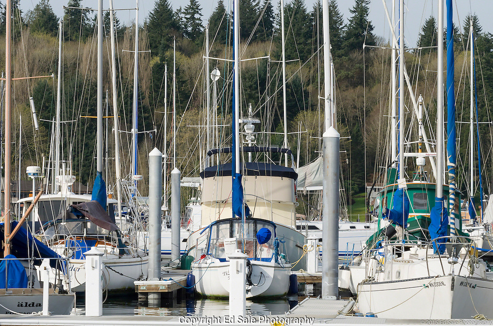 Masts of sailboats in morning sun, in Winslow, Washington marina, almsot obscure view of trees in background