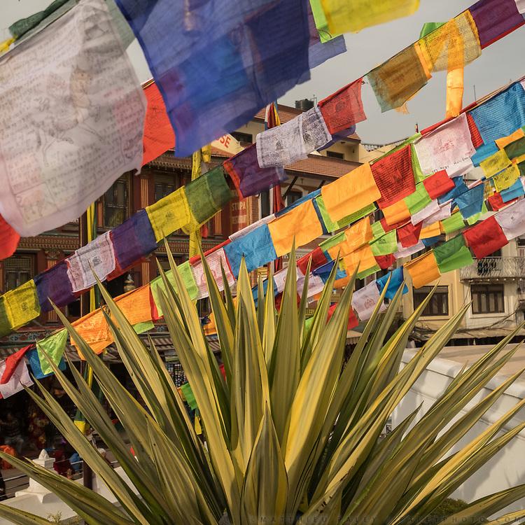 Detail of vegetation and prayer flags around Boudhanath stupa.
