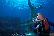 divemaster at Atlantis Dive Center feeds great barracuda, Sphyraena barracuda, from mouth<br /> Key Largo, Florida Keys ( Western Atlantic Ocean )