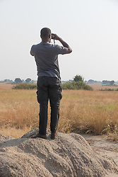 Medi Searching For Lions