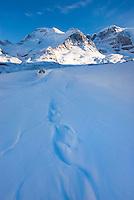 Mount Athabasca 3,491 m (11,453 ft) in winter seen Sunwapta River, Jasper National Park Alberta Canada