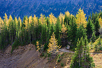 We went hiking at Ptarmigan Cirque in Kananaskis but the wind was nasty up on the cirque so we only stopped for a couple of quick group shots before retreating back into the forest below...  The Larch trees are in their full glory of fall colors and the vast expanse of Yellow was an amazing sight to see.<br /> <br /> ©2009, Sean Phillips<br /> http://www.Sean-Phillips.com
