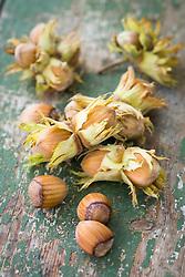 Hazelnuts on a wooden table - Corylus