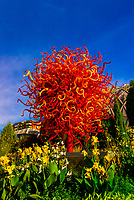 """Summer Sun"", Dale Chihuly Exhibition (blown glass), Denver Botanic Gardens, Denver, Colorado USA."