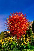 """Summer Sun"", Dale Chihuly Exhibition (blown glass), Denver Botanic Gardens, Denver, Colorado USA."