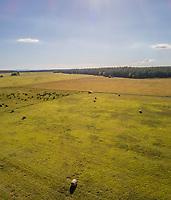 Aerial view of farmland with a straw bales on the island of Vormsi in Estonia