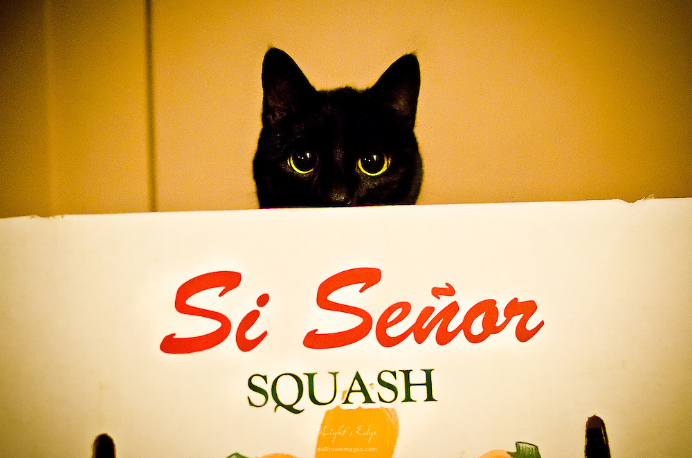 One of our cats peering over the edge of a produce box left on the kitchen floor.