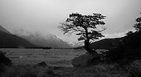 b/w tree by the lake.