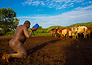 BODI TRIBE FAT MEN<br /> (very) big is beautiful<br /> <br /> Every  year,  takes  place  in the deep south of Ethiopia, in  the <br /> remote  area of Omo valley, the celebration of  the  Bodi  tribe  new <br /> year: the Kael.For  6  months  the  men  from  the tribe will   feed   themselves with only fresh  milk  and  blood  from <br /> the cows. They will not  be allowed to  have sex and to go out of their  little hut.  Everybody will take care of  them, the  girls  bringing  milk  every morning in pots or bamboos. The  winner  is  the  bigger.  He  just <br /> wins fame, nothing special. This  area does not  welcome tourists and has kept his traditions<br /> <br /> Photo shows: The fat men drink milk and blood all day long. The first  bowl  of blood  (1 to  2  liters)  is  drunk  at  sunrise. The place  is  invaded  by  flies. The  man must   drink   it   quickly   before   it <br /> coagulates. Some  can  not  drink  everything  and vomit it..<br /> ©Eric lafforgue/Exclusivepix Media