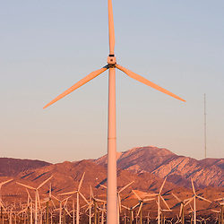 A wind farm in the San Gorgonio Mountain Pass in Palm Springs, California.