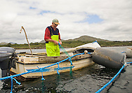 Fisherman harvesting mussels in Kenmare Bay, County Kerry, Ireland