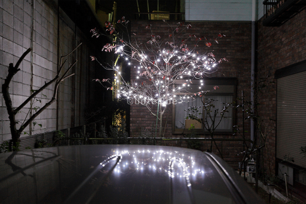 lighted up tree in garden