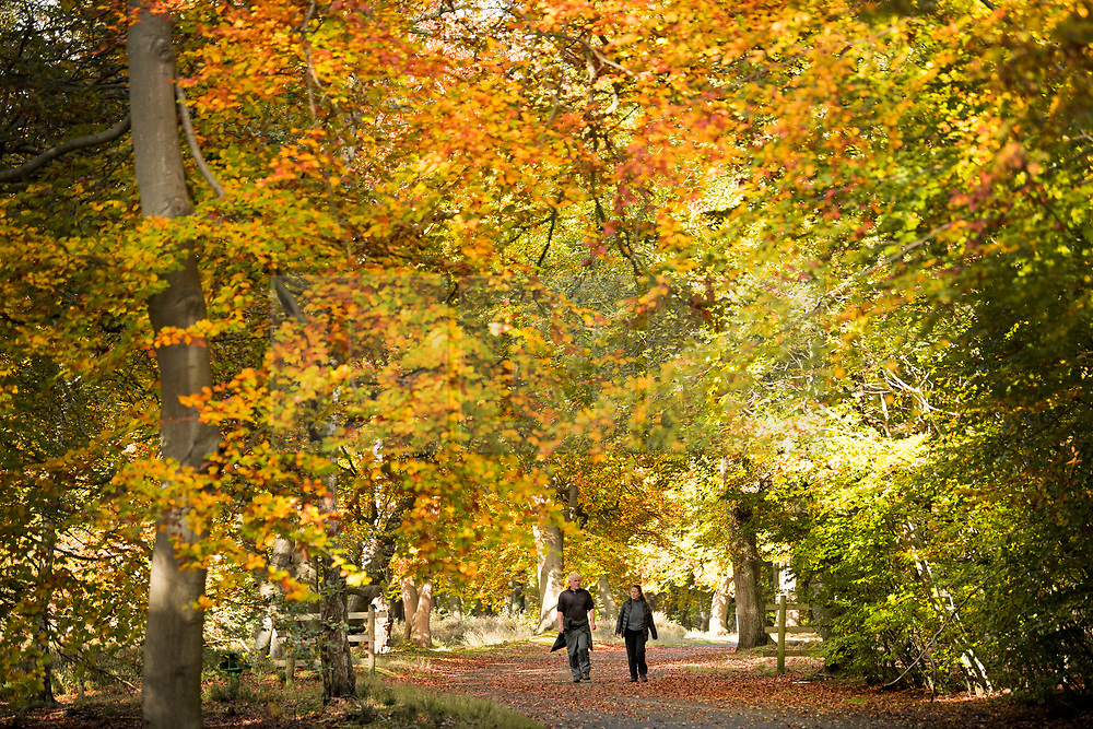 © Licensed to London News Pictures. 22/10/2020. Burnham, UK. A couple walk through autumnal colours at Burnham Beeches national park and National Nature Reserve in Buckinghamshire, south East England. Photo credit: Ben Cawthra/LNP