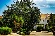 Flowers and Trees in a neighborhood in Tavira, Portugal