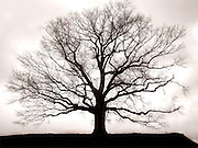A bare tree sits alone onto of a Tennessee hill, awaiting the warm sunshine to bring forth its blooms.