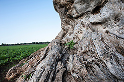 """La Valle d'Itria è una porzione di territorio della Puglia centrale, a cavallo tra le province di Bari, Brindisi e Taranto. Il suo territorio coincide con la parte meridionale dell'altopiano delle Murge: in senso stretto è la depressione carsica che si estende tra gli abitati di Locorotondo, Cisternino e Martina Franca. La principale peculiarità della valle sono i trulli, tipiche ed esclusive abitazioni in pietra a forma di cono, le masserie e il paesaggio rurale in genere caratterizzato dall'elevato uso della pietra locale utilizzata per costruire muri a secco e dal terreno di colore rosso acceso, tipico della Puglia meridionale. Il toponimo """"Itria"""" sembra derivare dal culto della Madonna Odegitria (in greco οδηγήτρια, cioè che indica la via) importato nel X secolo dall'impero bizantino."""