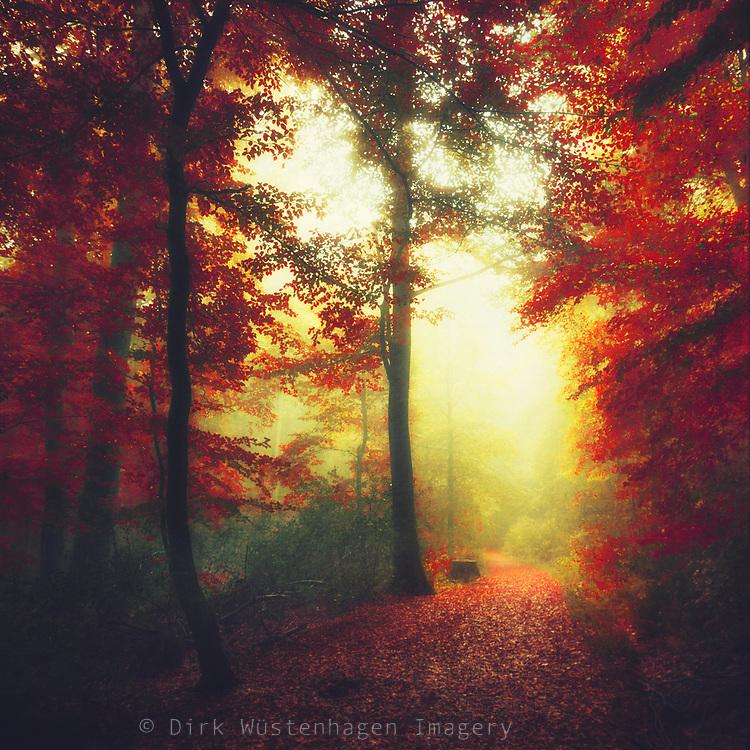 Moody and dreamy autumn forest<br /> REDBUBBLE Prints: https://rdbl.co/2kJvLOJ
