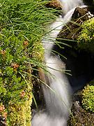 stream and grass in Mount Rainier National Park, Washington, USA