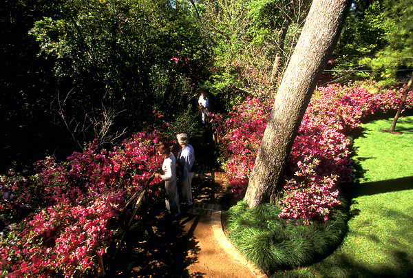 Stock photo of visitors to Bayou Bend enjoying the beautiful azalea trail.