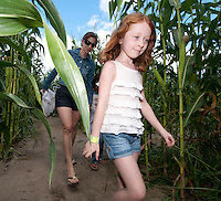 Finding the exit is not an easy task for Corinne Frazier followed by Kim Sanders as they work their way through the twists and turns of the Beans and Greens corn maze on Sunday afternoon during Harvest Fest weekend.  (Karen Bobotas/for the Laconia Daily Sun)