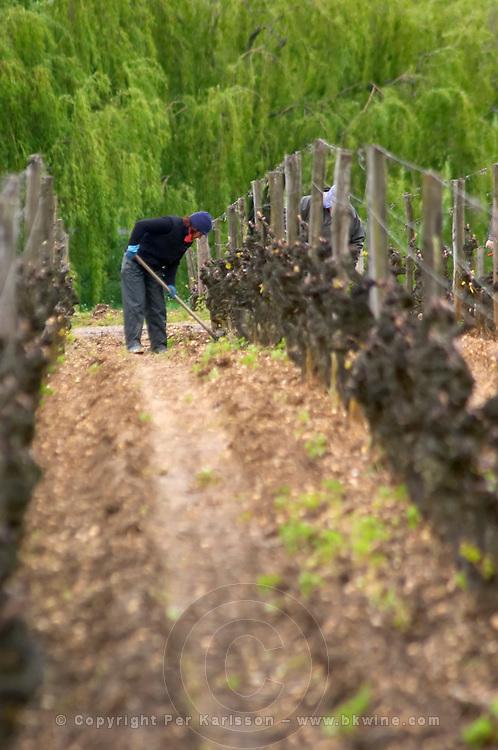 working the soil in the vineyard chateau d'yquem sauternes bordeaux france