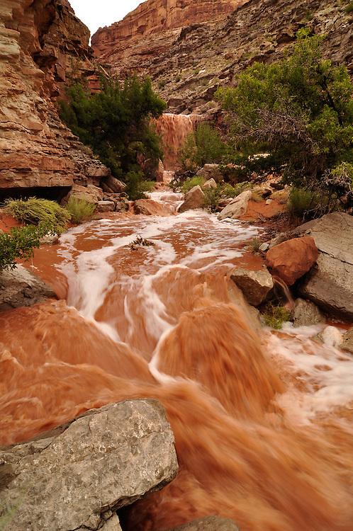 Flash flood in sidecanyon of Utah's San Juan River.