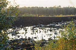 Turf of veenwinning voor brandstof en potgrond