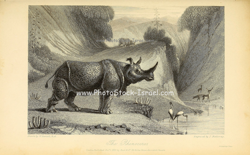 The Indian rhinoceros (Rhinoceros unicornis), also called the Indian rhino, greater one-horned rhinoceros or great Indian rhinoceros, is a rhinoceros species native to the Indian subcontinent. From the book ' The Oriental annual, or, Scenes in India ' by the Rev. Hobart Caunter Published by Edward Bull, London 1835 engravings from drawings by William Daniell