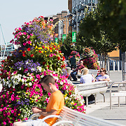 16.08.2016    <br /> Limerick City and County Council, Flowers, Boardwalk, Harvey's Quay Limerick City. Picture: Alan Place