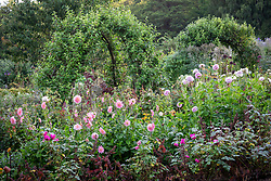 Dahlias and pear arches in the cutting garden at Chastworth House