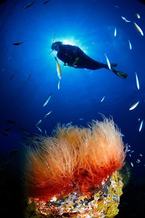 14/Octubre/2014 Islas Canarias. El Hierro<br /> Sus Anita buceando en Punta de las Cañas durante el 18º Open Fotosub.<br /> <br /> ©JOAN COSTA