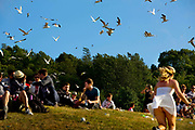 Seagulls swooping for food in the Park, Glastonbury run by Emily Eavis (daughter of Michael Eavis) <br /> Glastonbury is the world's biggest greenfield festival with nearly 200,000  visiters camping in the dairy farm of Michael Evis in Somerset, UK.<br /> The first festival was in 1970 and was influenced by hippie ethics and the free festival movement. The festival retains vestiges of this tradition such as the Green Fields area which includes the Green Futures and Healing Field.