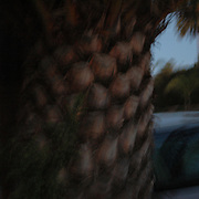 Mysterious, blurry image of palm tree trunk and out-of-focus street scene.