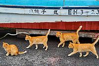 Japon, île de Shikoku, préfecture d'Ehime, île de Muzuki, ile aux chats // Japan, Shikoku island, Ehime region, Muzuki island, Cat island