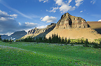Alpine meadows at Logan Pass with the Garden Wall in the distance, Glacier National Park Montana USA