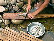 Using the boat paddle as a chopping board, local boatman/fisherman, Savath prepares fish for cooking over an open fire which he has just caught by electric fishing in the Nam Ou river, Phongsaly province, Lao PDR. The Nam Ou river connects small riverside villages and provides the rural population with food for fishing. But this river and others like it, that are the lifeline of rural communities and local economies are being blocked, diverted and decimated by dams. The Lao government hopes to transform the country into 'the battery of Southeast Asia' by exporting the power to Thailand and Vietnam.