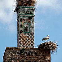 Africa, Morocco, Rabat. Storks nesting on minaret of ancient mosque in the Chellah, Rabat.