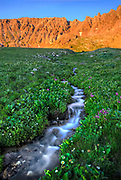 An alpine stream leads from snow fields on Fletcher Mountain through the wildflowers of Mayflower Gulch in the Rocky Mountains north of Leadville, Colorado