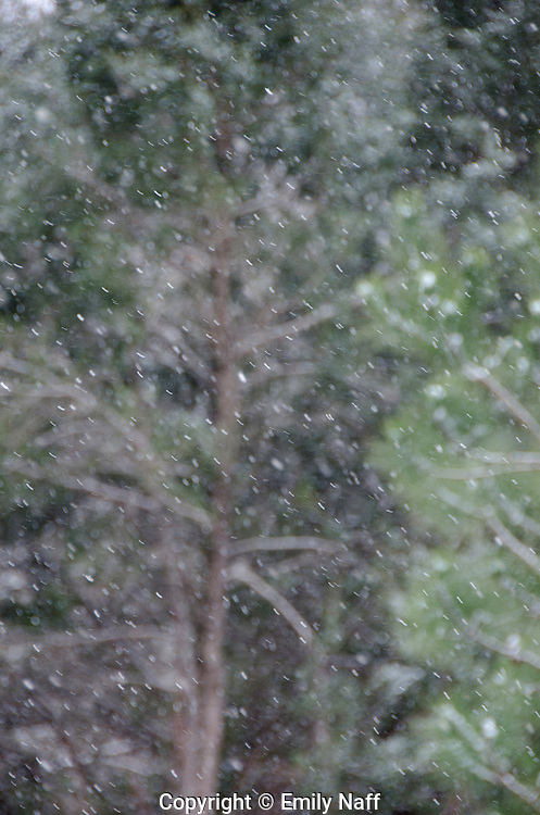 In autofocus mode, the camera kept trying to focus on the trees in the background.  Switching to manual mode allowed control of focus to make the falling snow sharp and to blur the trees in the background.