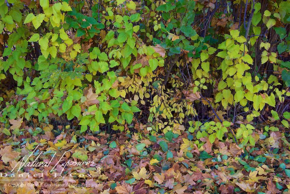 Fall colors in a yard in Missoula, Montana