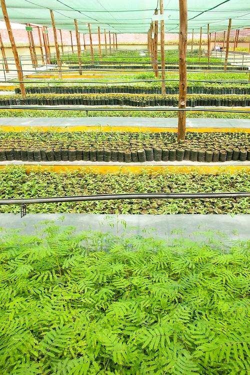 Plants in seedling nursery in a greenhouse.