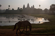Horse walks at dawn sunrise at Angkor Wat. This jewel in the crown of Angkor's ancient temples is a vision of beauty, might and Khmer architectural excellence. The five towers dominate the view, which you are led to trough outer walls, along causeways over the moat and past the two giant pools which act as a mirror of the vision. Consecrated at around 1150 to the Hindu god, Vishnu it is suggested that construction took 30 years.