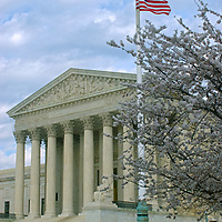 A cherry tree blooms in front of the U.S. Supreme Court building in Washington, D.C.
