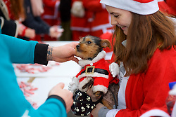 Everyone gets a medal in Scotland's fundraising Santa's run, walk and stroll around Edinburgh's West Prices Street Gardens, raising money to grant the Wishes of Children for When You Wish Upon A Star. Sunday 11th December 2016. (c) Brian Anderson   Edinburgh Elite media