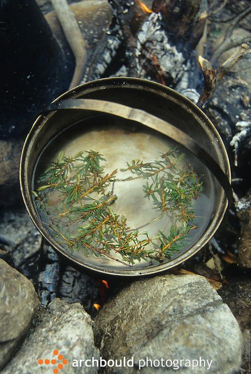 Labrador tea steeping on an open fire, Yukon