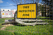 A yellow sign for a Tree Protection Zone, fenced off from the public with a recently felled tree inside. Norwich, Norfolk. United Kingdom