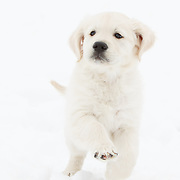 20180310 Puppies in Snow