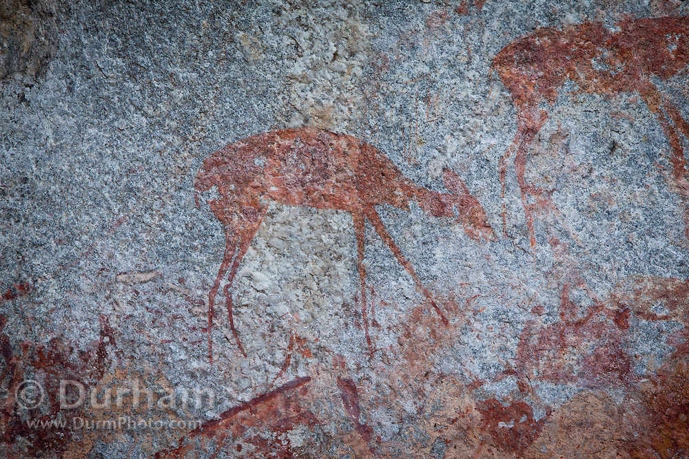 A small duiker depicted in San bushman rock paintings, estimated at around 2000 years old, in Nswatugi Cave in Matobo National Park, Zimbabwe.