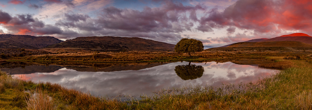 Lone willow tree, reflection in pond, dawn panorama, The Nevis, Otago, New Zealand